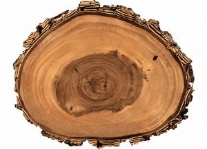 Oak Tannin